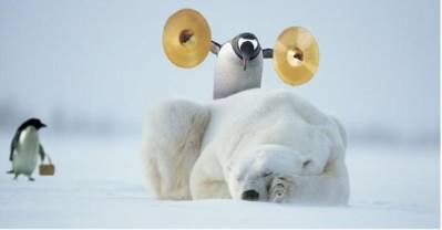 A musical penguin waking up an ice bear
